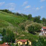 Eurotrip dzień 18 – Węgry: Tokaj – stolica dobrego wina