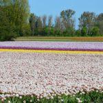 Dziewięć faktów o Holandii, które totalnie nas zaskoczyły