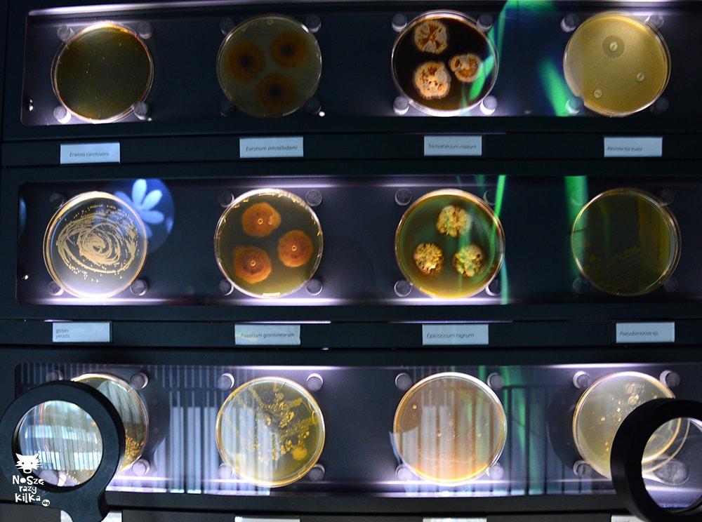 Micropia Amsterdam Holandia